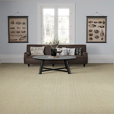 Phenix Patterned Carpet